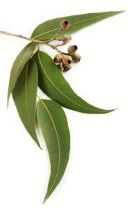 Jak na zimní neduhy s aromaterapeutickými prostředky